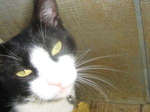 avery cat